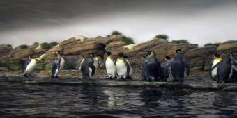 Comparing: Panda, Penguin and Hummingbird Google Updates