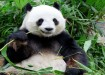 What is Google Panda 4.0?