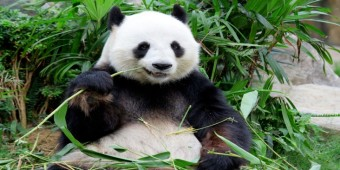 What is Google Panda 4.0?